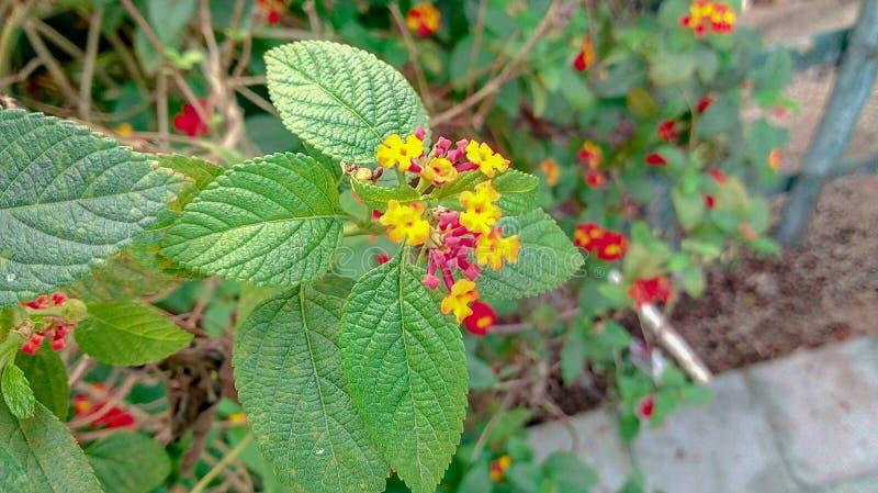 植物&红色花秀丽  免版税图库摄影