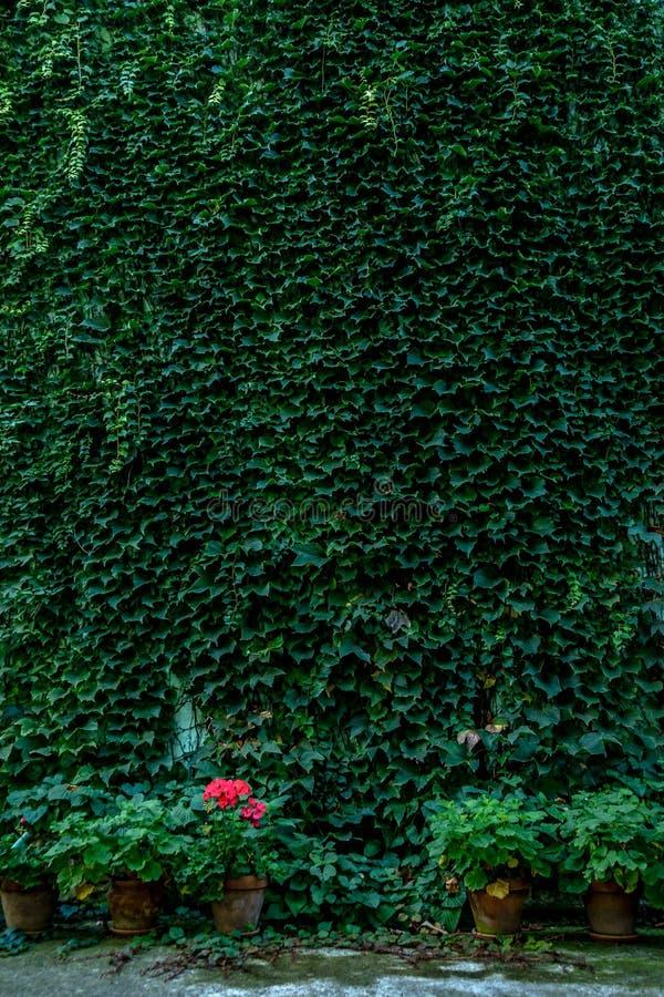 植物绿色墙壁  免版税图库摄影