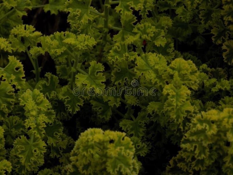 植物 库存照片