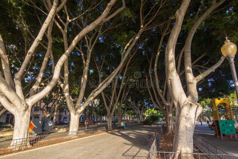 植被和庭院在阿尔梅里雅,西班牙停放尼古拉斯Salmeron 免版税库存照片