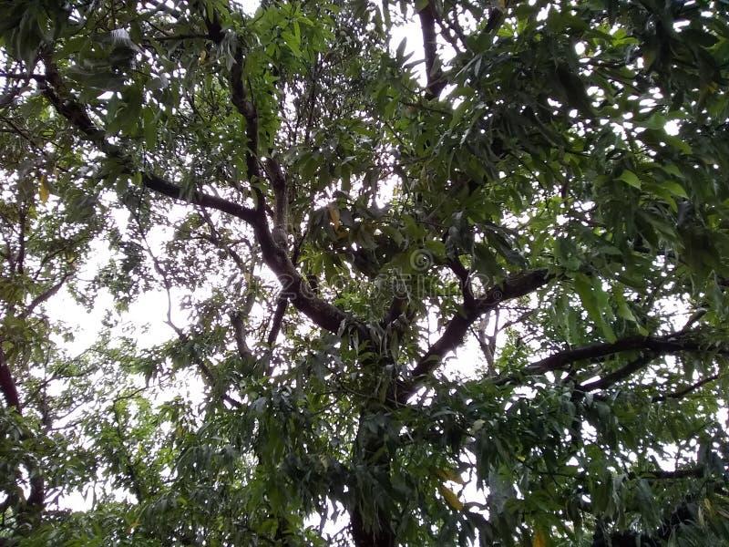 植被树森林草下午委内瑞拉 免版税库存图片