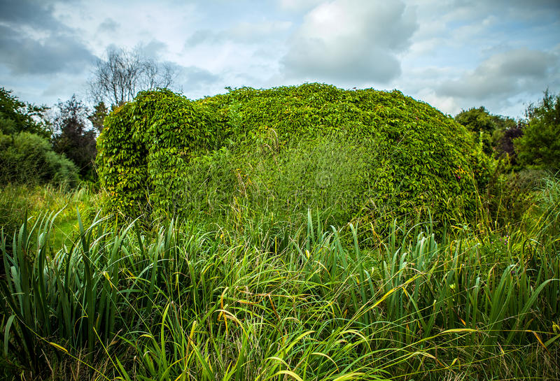 植被特写镜头照片报道的美好的框架 免版税库存照片