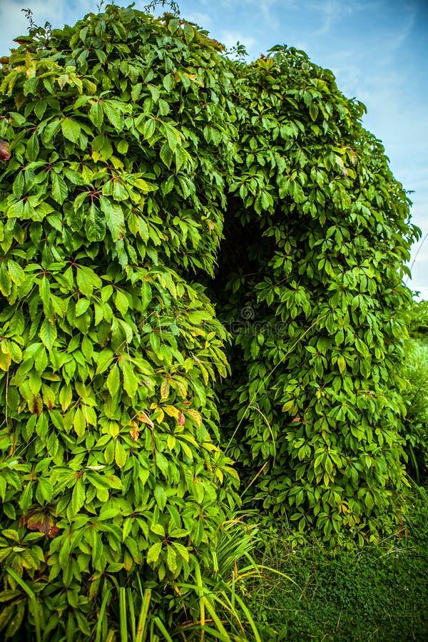 植被特写镜头照片报道的美好的框架 库存照片