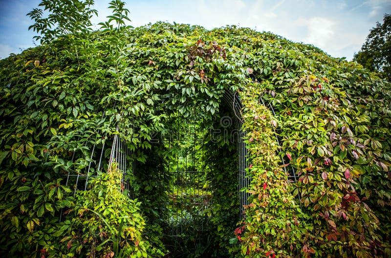 植被特写镜头照片报道的美好的框架 图库摄影