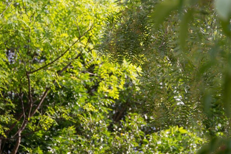 植被绿色背景在焦点外面的 免版税图库摄影