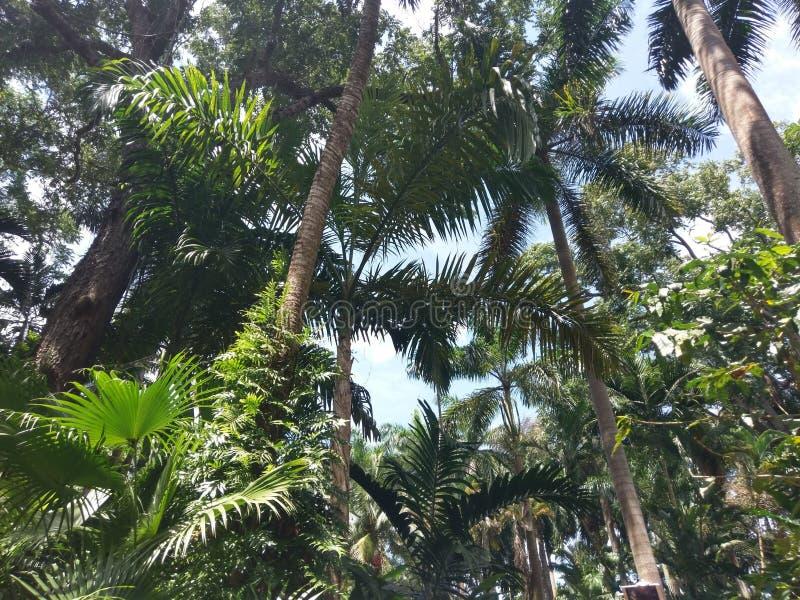 植被,树,生态系, arecales,植物,树头梭flabellifer,棕榈树 库存照片