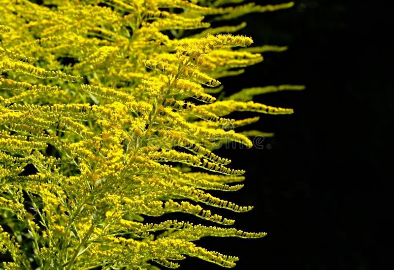 植被,植物,树,落叶松属