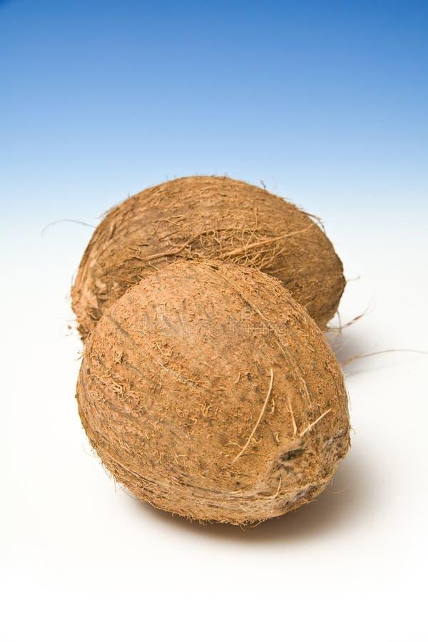 椰子二 免版税图库摄影