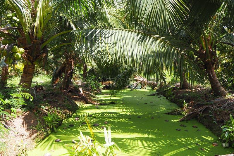 椰子农场在有绿色运河的泰国 库存照片