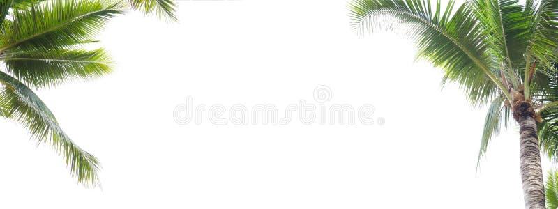 椰子叶子在白色背景丝毫拷贝空间,夏天概念的框架孤立全景  图库摄影