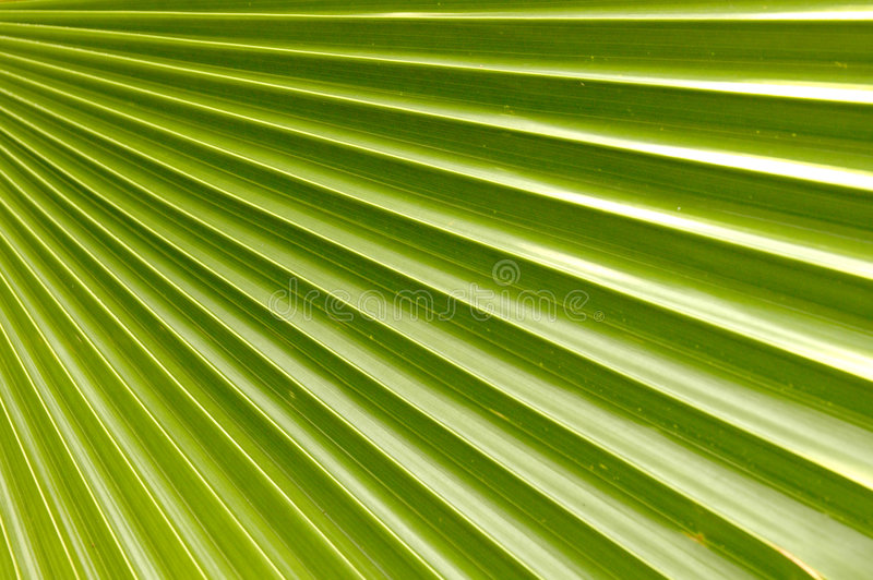 椰子叶子掌上型计算机 免版税库存图片