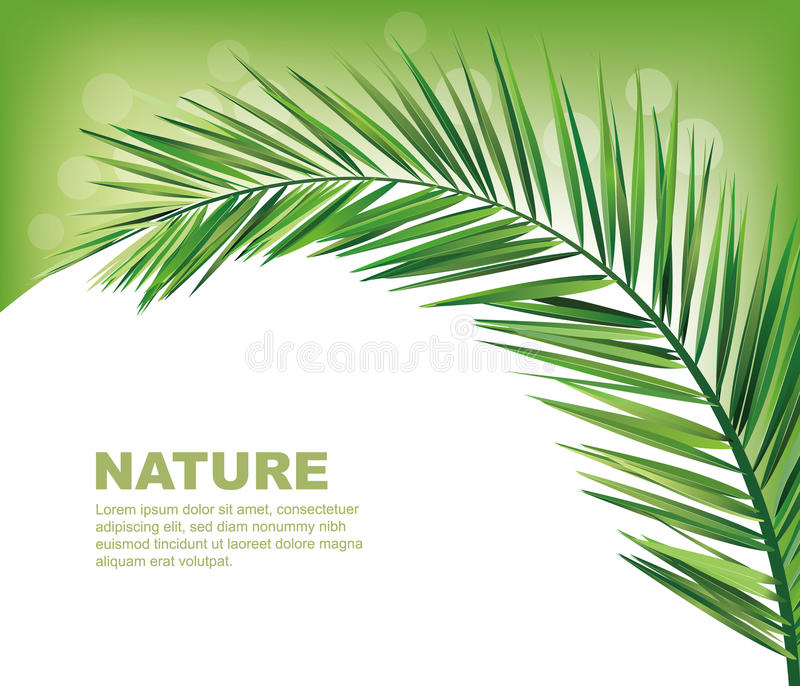 椰子叶子 向量例证