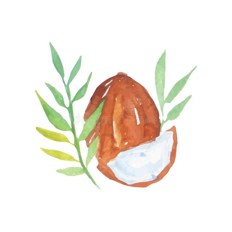 椰子手拉的水彩绘画与绿色棕榈树的离开 热带的果子 护肤的传染媒介设计 库存例证