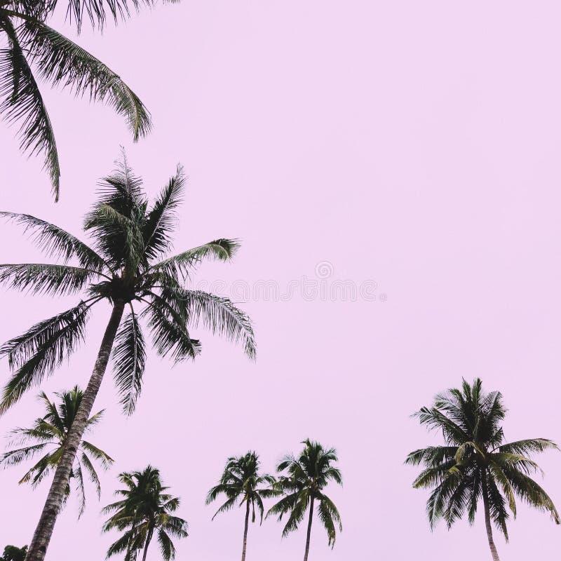 椰子有桃红色背景 免版税库存照片