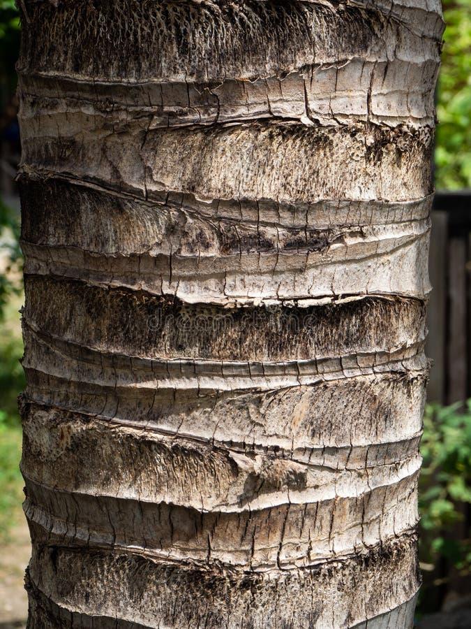 椰子木纹理 库存照片