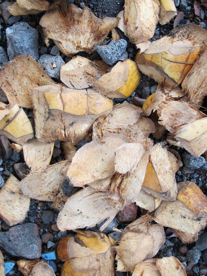 椰子果子皮肤剥落,在石渣地面上被撒布 库存照片