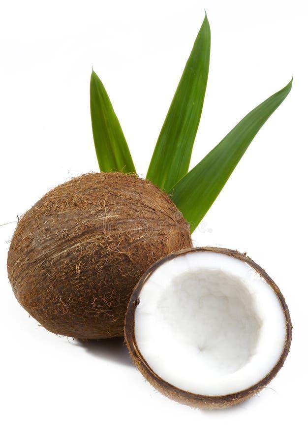 椰子果子 免版税库存图片
