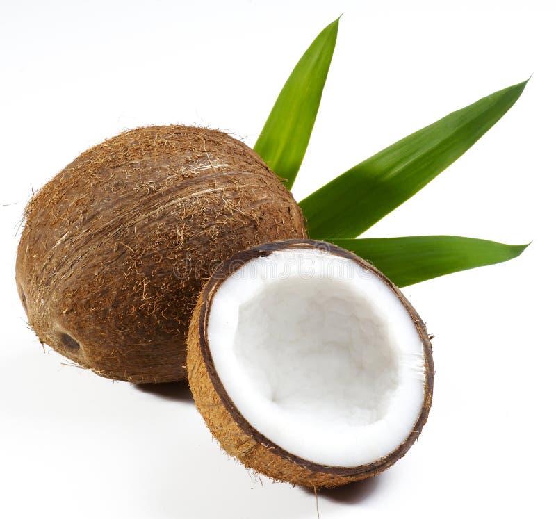 椰子果子 免版税库存照片