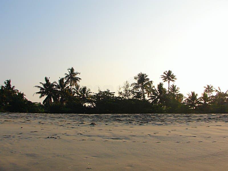 椰子树和棕榈树在桑迪海岸-阿勒皮,喀拉拉,印度 库存图片