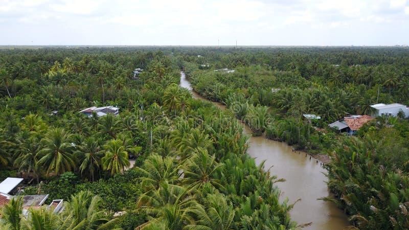 椰子树在越南 库存照片