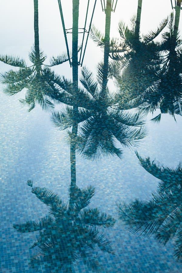 椰子树在水中反射 库存照片
