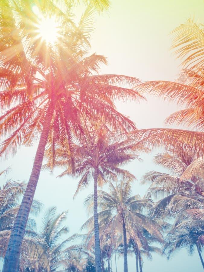 椰子树或棕榈树在海滩在暑假 免版税库存图片