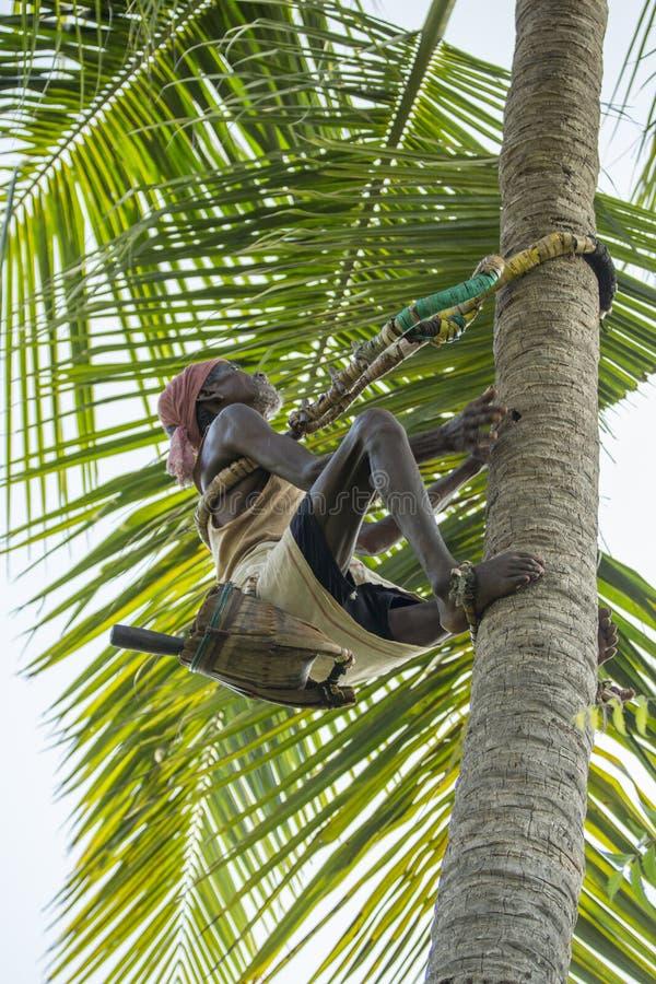 椰子树的老登山人 免版税图库摄影