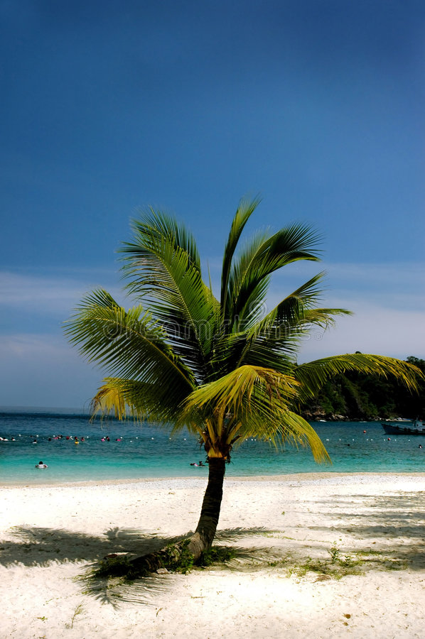Download 椰子树 库存照片. 图片 包括有 树荫, 椰子, 外面, 样式, 放松, 聚会所, 天空, 新鲜, 换码, 沉寂 - 179566