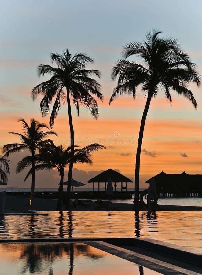 椰子树siluate 库存图片