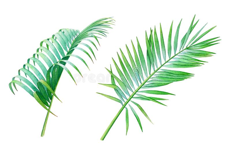 椰子棕榈叶的水彩汇集 皇族释放例证