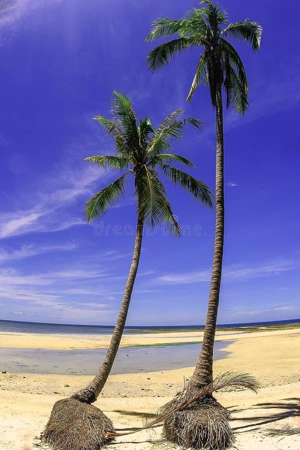 椰子棕榈滩在泰国 免版税库存照片