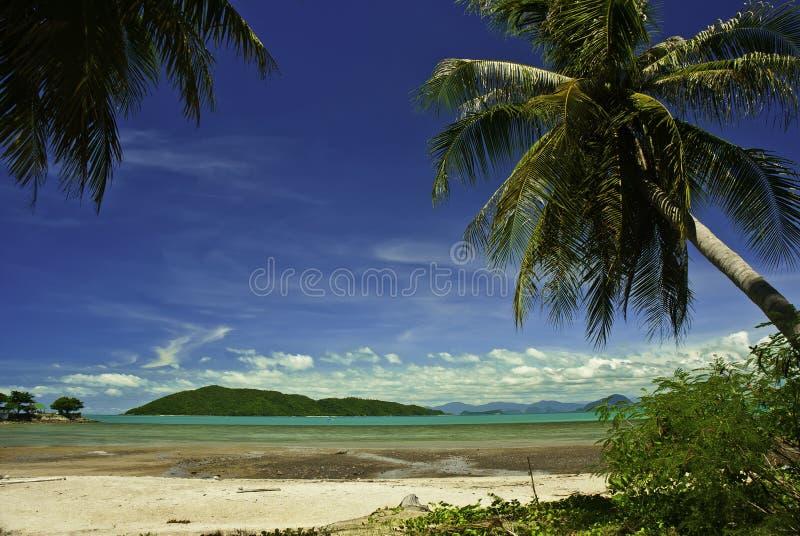 椰子棕榈滩在泰国 图库摄影