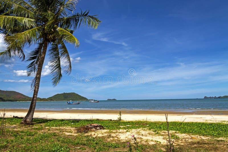 椰子海边 库存图片