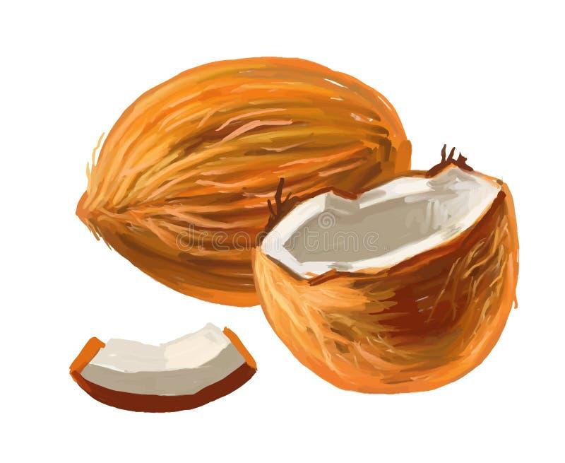 椰子的图片 向量例证