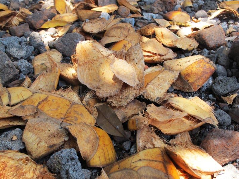 椰子皮肤果皮,撒布在石渣地面 库存照片