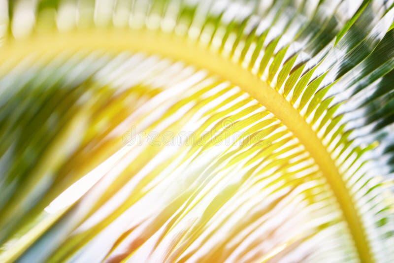 椰子离开-新绿色棕榈叶背景热带植物 免版税库存照片