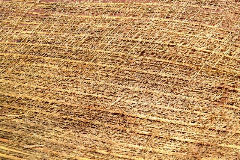 椰子纹理 库存图片