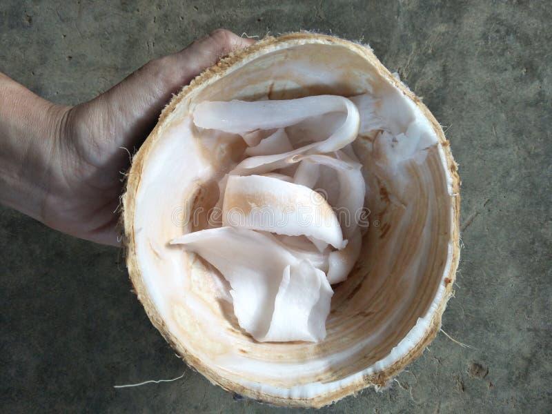 椰子肉 库存照片