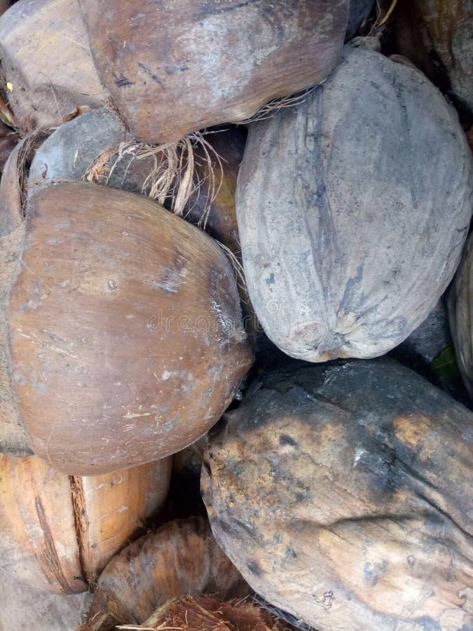 椰子须根 免版税库存照片