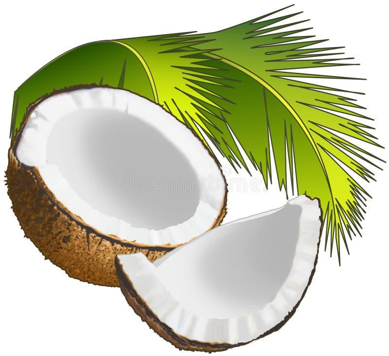 椰子 向量例证