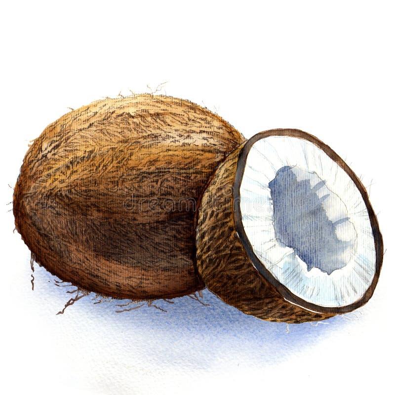椰子 皇族释放例证