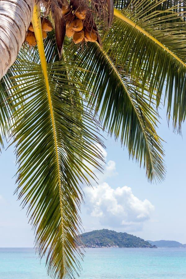 椰子plam树 库存图片