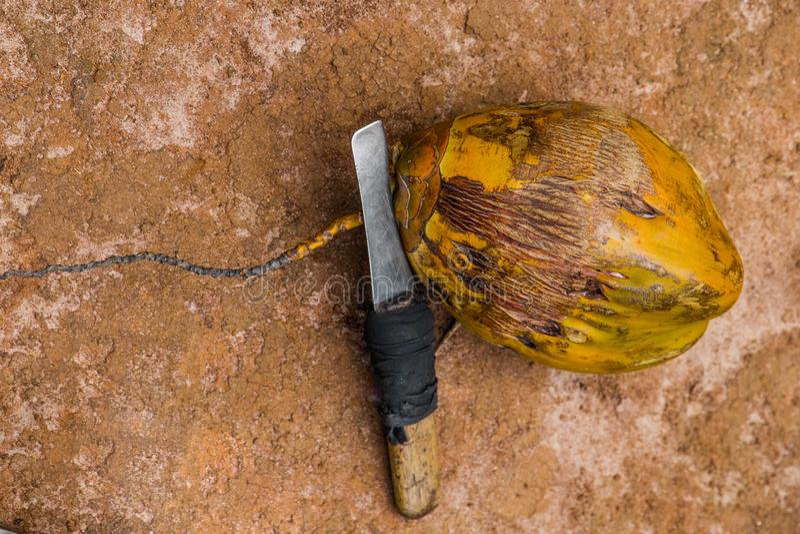 椰树坚果和刀子地球上 库存照片