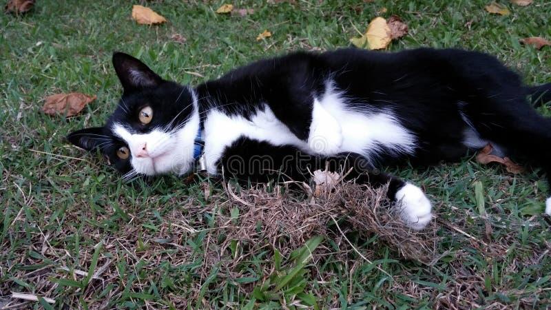 椰树猫 免版税图库摄影