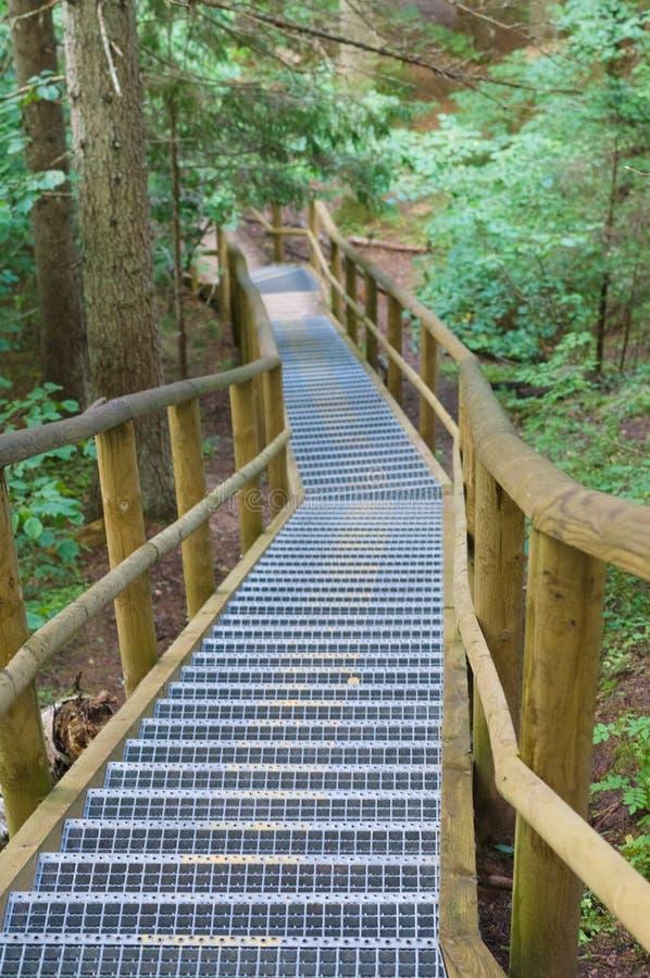 绕楼梯在夏天森林里 图库摄影