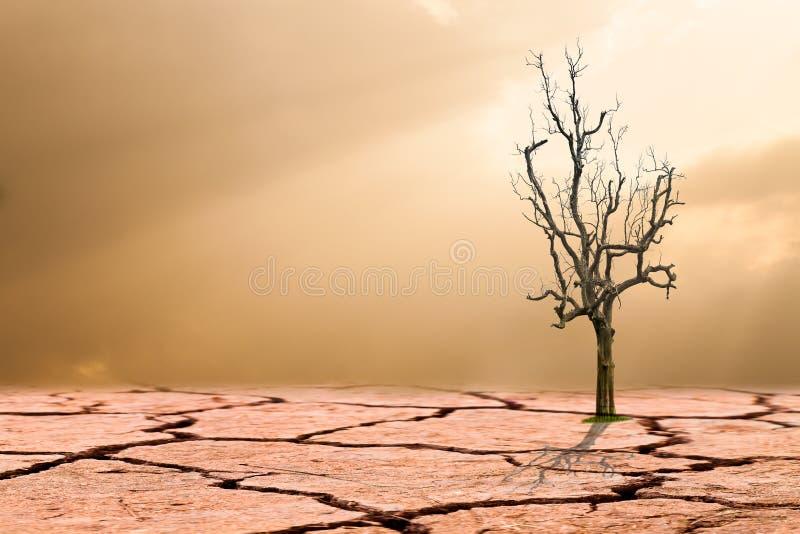 概念全球性变暖 在破裂的沙漠的死的树 库存图片