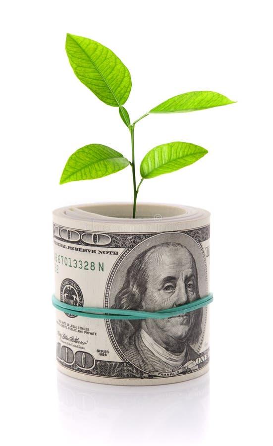 概念增长图象查出的货币白色 库存照片