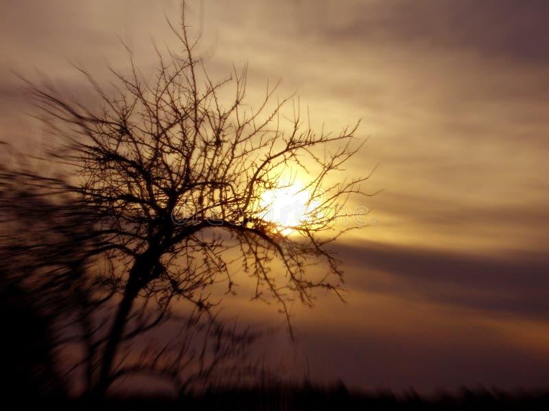 概念性图象日落结构树 免版税库存照片