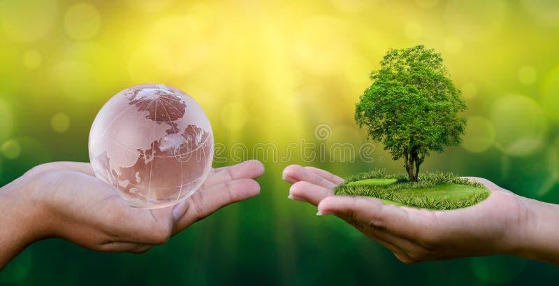 概念救球世界救球环境世界是在绿色bokeh背景的手里在生长种子的树的手上 免版税库存照片