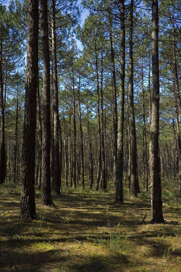 概念环境森林 库存图片